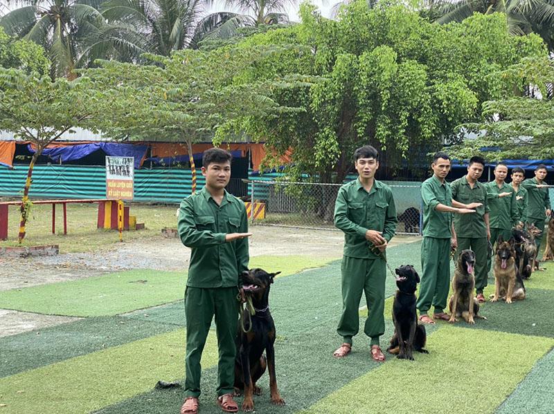 Dịch vụ huấn luyện chó cảnh trọn gói uy tín tại Tphcm