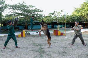 Những giống chó được nuôi giữ nhà tốt nhất tại Việt Nam